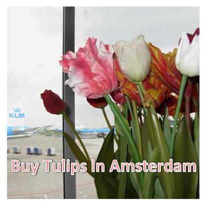 Buy Tulips in Amsterdam~